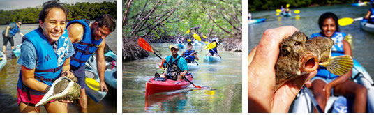 Mangrove Tunnels Kayak Tours Pictures